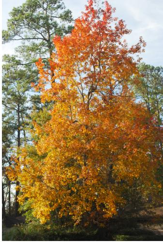 Fall Colors In The Woodlands Tx Blog For